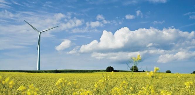 wind turbine rape seed